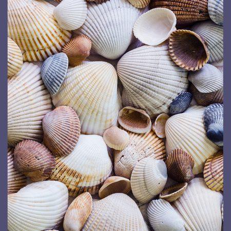 CAT 0122-15-2 Shells-www