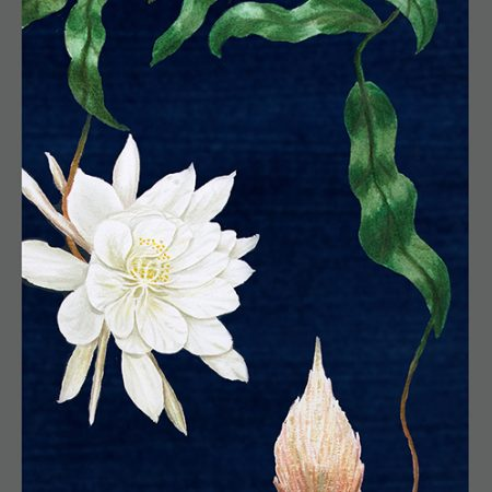 CAT Night Blooming Cereus-www