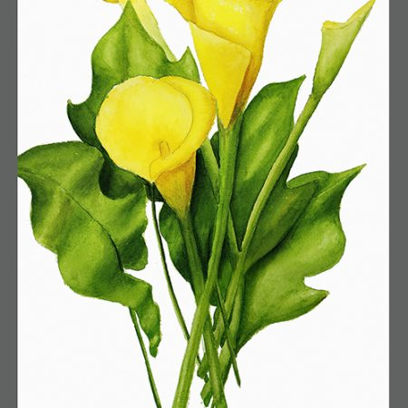 CAT Yellow Calla Lily-www